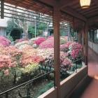 つつじ回廊 大つつじ庭園に囲まれた閑静な和風旅館です。