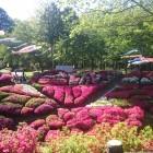 毎年5月に開かれる「台城つつじ祭り」は多くの方でにぎわいます。