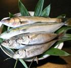 釣りたて海鮮魚 毎週大将自ら釣り上げた魚をご用意しております。