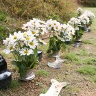 個別用墓地 ¥39,800 骨壷の文字代は別途管理費2年間¥10,000