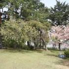 碑 大正5年1916年 鈴岡公園碑が建立されました。 碑の近くにはひょうたん池という池があります。