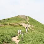 もう少しで山頂です 整備されているものの、足元には石がゴツゴツと。クマザサの脇にはささゆりの花も咲いています。