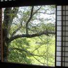 窓からみえるのは古木の桜です。桜が満開の時期に訪れるのもいいですね。