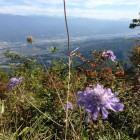 頂上付近には、マツムシソウも咲いていた。