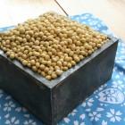 大鹿の気候風土が育てた伝説の豆「中尾早生」 皮が薄く、香り豊かでコクと甘みが多いのが特徴です。