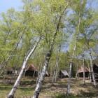 キャンプ場 白樺ゾーン(写真)、松林ゾーンがあります。バンガロー23棟。車乗り入れ可能フリーサイト35張。